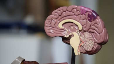 Photo of 港大研究首次發現新冠病毒可感染大腦